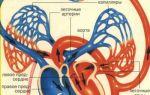 Вены большого круга кровообращения: описание, схемы
