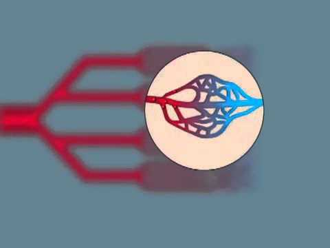 Вены головы и шеи: анатомия головы, функции и строение вен