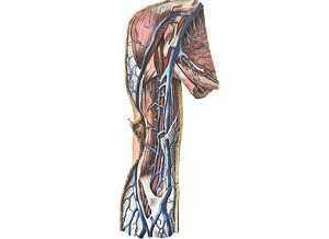 Поверхностные вены - функции, заболевания, диагностика, лечение