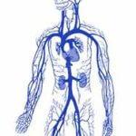 Флеболог: кто это, что лечит, где принимает, методы лечения